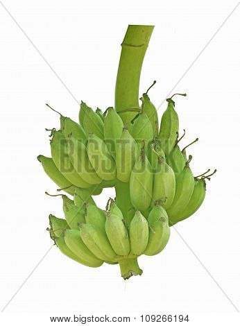 The Banana Isolated On White Background