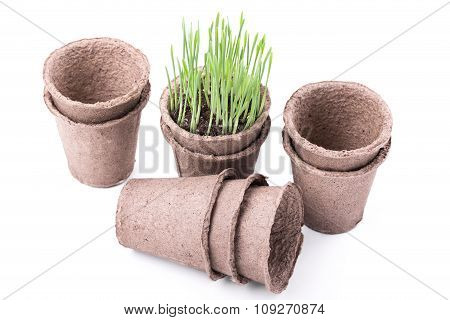 Peat Pots With Green Grass On White Background