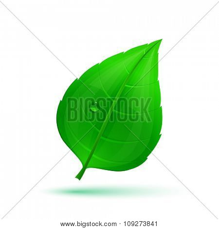 Glossy spring green leaf with drop of water. Vector illustration