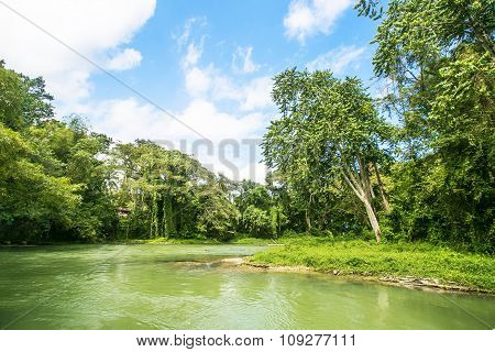 Wilderness Along The Martha Brae River In Jamaica.
