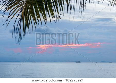 Calm Tropical Sunset On A Background Of Palm Tree.
