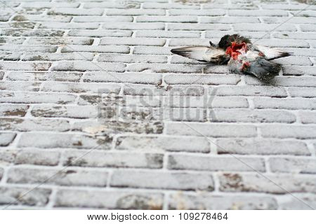 Dead pigeon on street covered with snow. Death concept