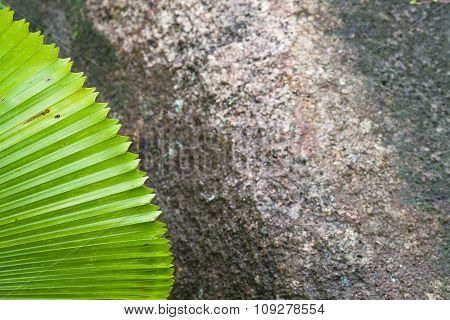 Green Palm Leaf On A Background Of Dark Stone.