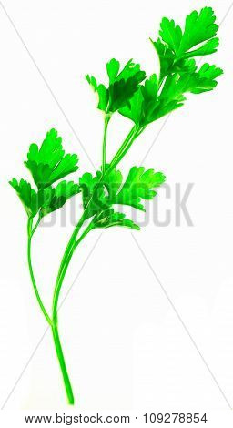 Isolated green plant on white brightly lit from behind