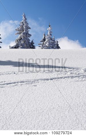Snow mountain and trees with snow. Winter concept