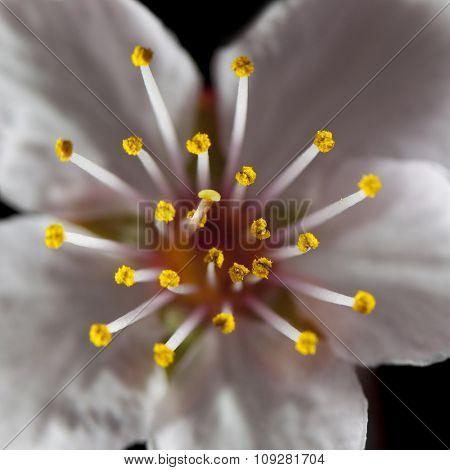 Floral design. Focus on stamen