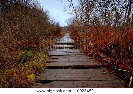 Old Wooden Path Through A Bog