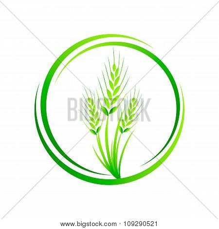 Wheat in a circler, wheat grass green juice. Logo, banner, frame for business, the store site for cl