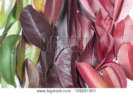 rainbow background of autumn leaves
