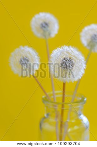 Dandelion Flowers In A Glass