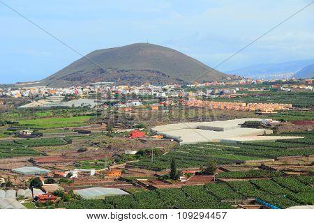 Tenerife Agriculture