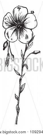 Flax flower, vintage engraved illustration. Industrial encyclopedia E.-O. Lami - 1875.