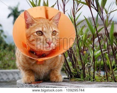 Cute cat wearing orange plastic cone collar
