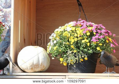 Pumpkin (White) - Flowers