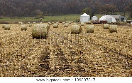 Round Corn Bales