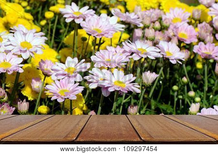 Yellow And Pink Chrysanthemum Flowers In The Garden.