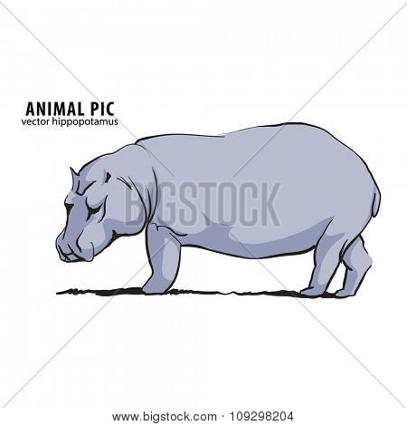 Illustration of hippo on white