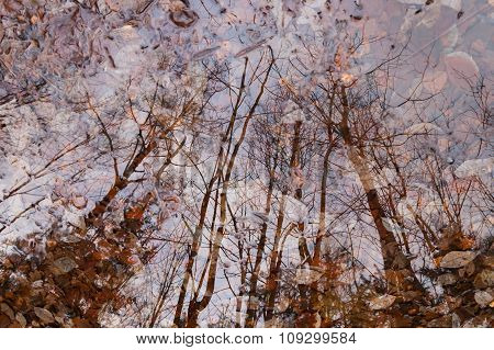 Autumn forest reflection in puddle