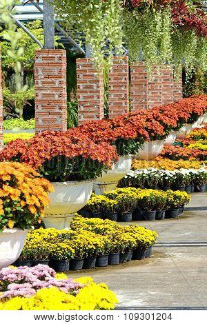 Garden Arrangement.