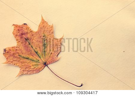 Autumnal Leaf On Old Paper