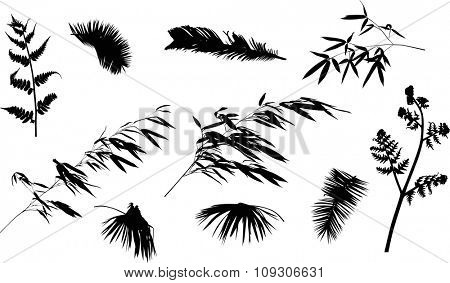 illustration with tropical leaves collection on white background