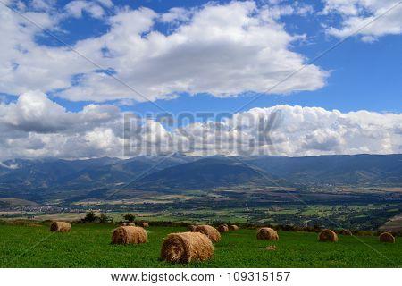 Post rain summer meadow