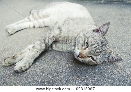 Cat Lying On The Ground.