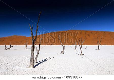 Dead acacia trees in Sossusvlei Pan, Namibia.