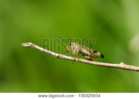 Insect On A Twig