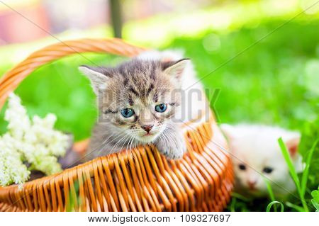 small cat on grass