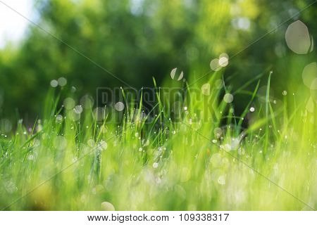 Fresh Brightly Green Weed With Morning Dew Drops