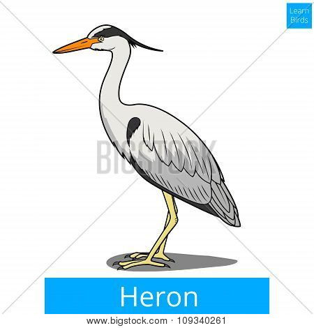 Heron learn birds educational game vector