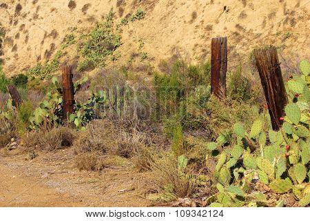 Rustic Desert Fence