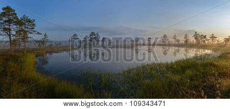 Bog Landscape in the Morning