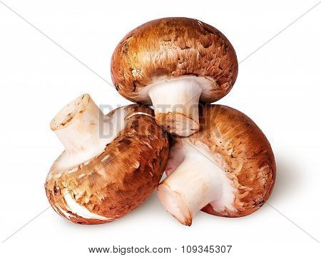 Three Whole Fresh Brown Champignons