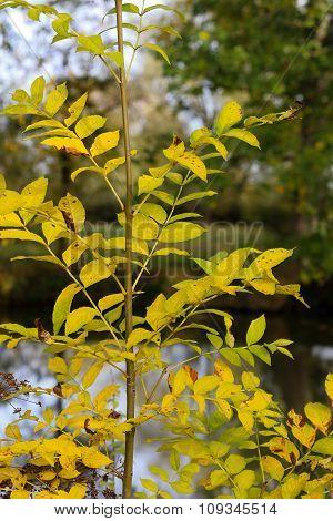 Autumn Leaves Sunny Fall Landscape Colorful Foliage Background