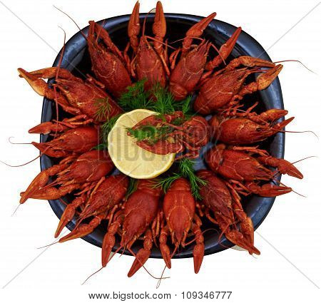 Boiled crawfish on a plate isolated on white