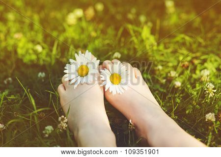 Child Feet With Daisy Flower On Green Grass In A Summer Park. Instagram Filter.