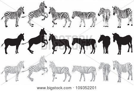 Set Of Zebra On A White