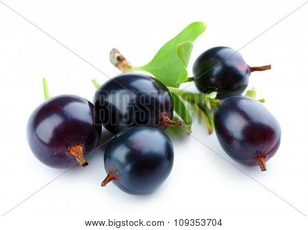 Wild black currant with green leaf isolated on white