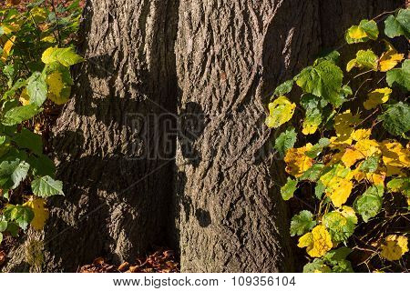Old Tree Trunk Bark Rough Background