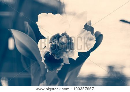 Abstract Orchid Flower Background,film Style Toning,selective Focus