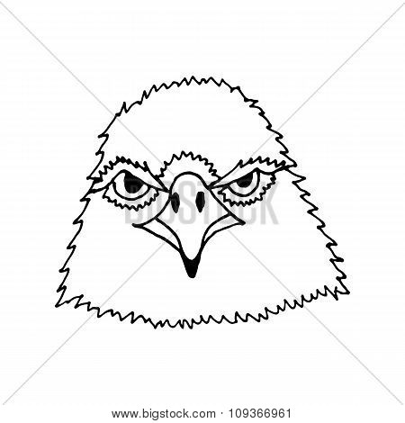 hand draw eagle's head