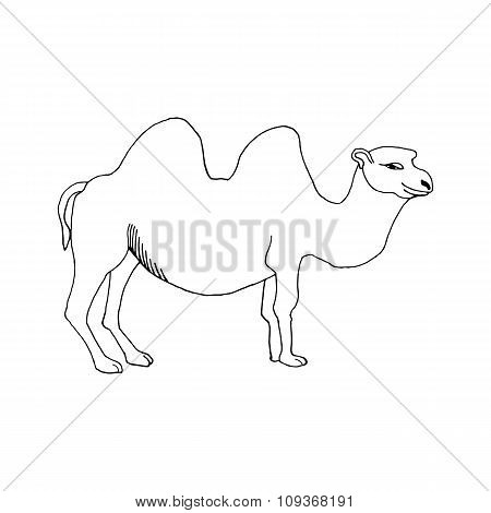 hand draw a camel