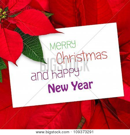 Christmas Greeting Card Poinsettia Decoration With Text