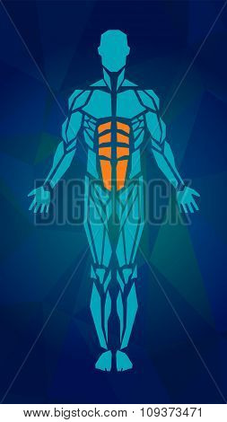 Polygonal Anatomy Of Male Muscular System. Human Muscle Vector Art, Front View.