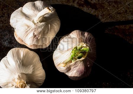 Garlic Heads On A Black Background