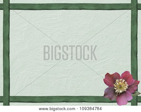 Winter Background With Green Wooden Frame And Helleborus Flower