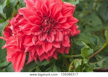 Some Beautiful Red Flower Blossom In Nature