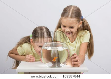 The Girls Are Laughing And Having Fun Watching The Behavior Of Goldfish